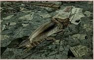RAD-Kakerlake